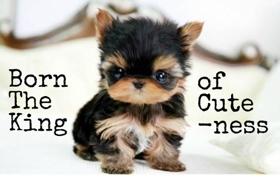 cutepupforblog1