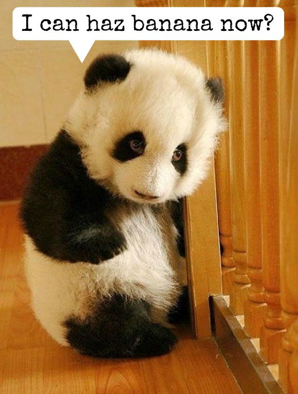 pandaforblogbanana